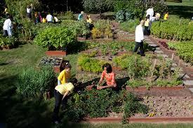 kitchen garden design ideas michelle obama harvests the white house kitchen garden photo