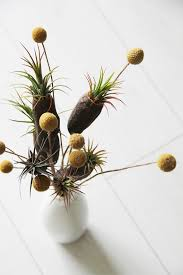 24 best tohold images on pinterest air plants air plant
