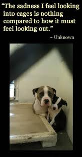 every animal posted needs rescue asap many are dying every day