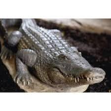 crocodile alligator garden ornament sculpture 2ft