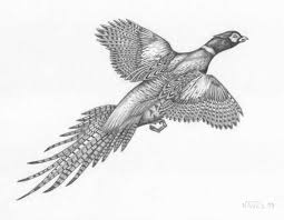http www bassjack com jacks landing images pheasant jpg wood