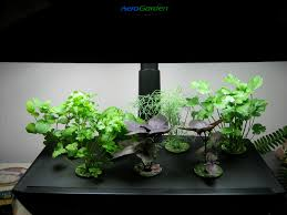 aerogarden expaeroment day 38 the greer farm