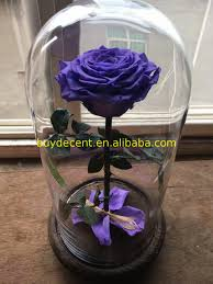 modern design beautiful preserved rose in glass dome unfade long