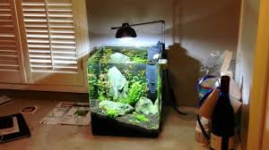 Small Tank Aquascaping The Best Nano Tank Setups The Aquarium Guide
