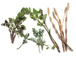 native plants of japan feast from the forest foraging for edible plants in japan the