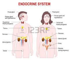Cartoon Human Anatomy Human Female Reproductive System Images U0026 Stock Pictures Royalty