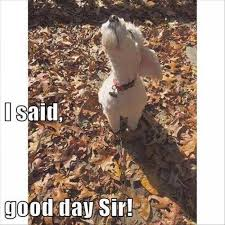 Good Day Sir Meme - i said good day sir dog meme