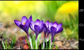 Flower Pictures Beautiful Flowers Images Qygjxz
