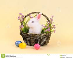 bunny basket eggs fluffy easter bunny in a basket with flowers royalty free stock