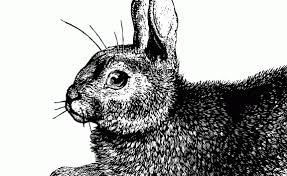 vintage rabbit tag rabbits vintage fangirl