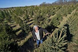 in a big year for live christmas trees one area farm goes dark