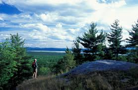 New Hampshire forest images Freedom town forest the trust for public land jpg