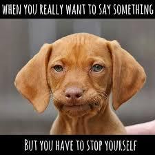 Puppy Face Meme - puppy face memes memes pics 2018