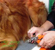 pet grooming the good the bad u0026 the furry tuesdays tip 8 nail