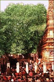 holy of buddhism bodh gaya place of enlightenment