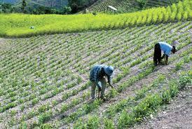 imagenes de sud yungas cáceres anuncia incorporación de caranavi y apolo en la ley de zonas