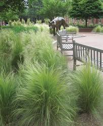 42 best grasses ground covers images on