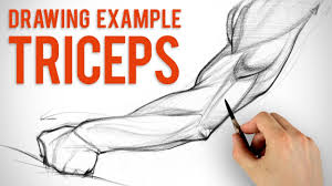 how to draw arms triceps assignment example youtube