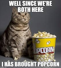 Meme Eating Popcorn - cat eating popcorn meme generator imgflip