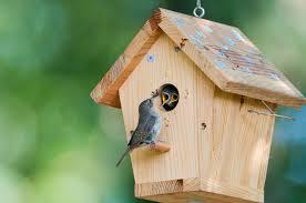 cardinal bird home decor attract cardinals to your yard