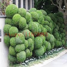 100 pcs juniper seeds juniper bonsai tree seeds tree outdoor