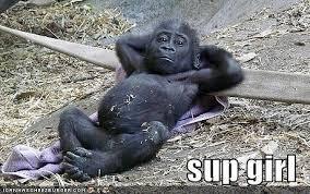 Ape Meme - 86056 sup girl meme ape lo0r jpeg 460纓288 lol pinterest meme
