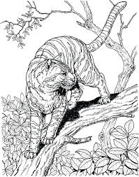 coloring page tigers white tiger coloring pages tenaciouscomics com