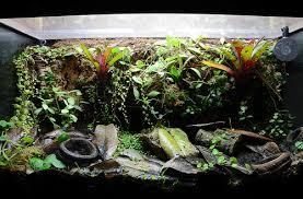 29 gallon phyllobates vittatus vivarium 8 months 10 12 12