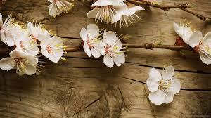 wood flowers 1920x1080 flowers on the board wallpaper
