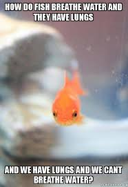 I Cant Breathe Meme - how do fish breathe water and they have lungs and we have lungs and