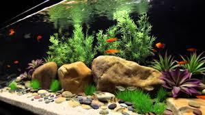 best freshwater aquarium 2017 aquaria hobbyist
