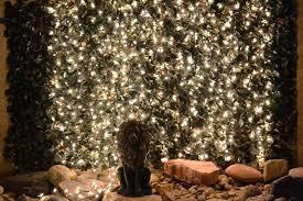 twinkle lights lights