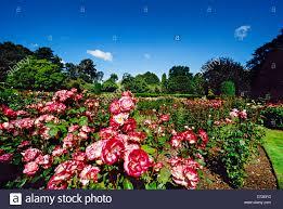 New Zealand Botanical Gardens Garden Botanic Gardens Christchurch New Zealand Stock