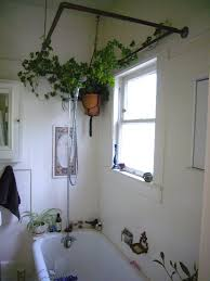 Home Decoration With Plants by Awesome Plants For Bathrooms 47 For Your Home Interior Decoration