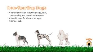 Types Of Dogs Next Pug Traditionally Refers To A Very Small Dog Or A Grouping Of