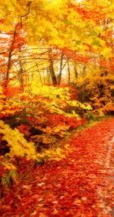 autumn leaves road hd wallpaper