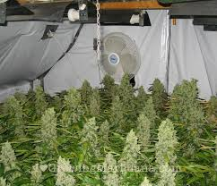Best 25 Marijuana Grow Lights by How To Build An Indoor Marijuana Grow Room