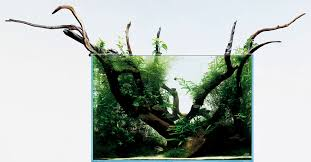 Aquascape Takashi Amano Go Take Your Custom Aquarium To The Next Level With These