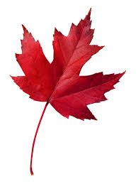 canada maple leaf symbol pictures free download