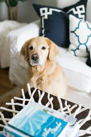 ikea dogs a little look see into our family room u2014 abby capalbo