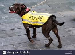 Seeking New Black Seeking New Owner Wearing Yellow Adopt Me Coat Stock