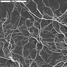 Popcorn Ceilings Asbestos California by Usgs Denver Microbeam Laboratory Image Gallery Ii