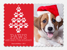 pet christmas cards photoaffections