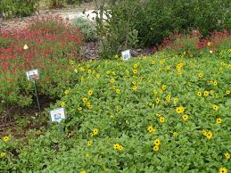 gardening in winter garden orange county master gardeners plant fair