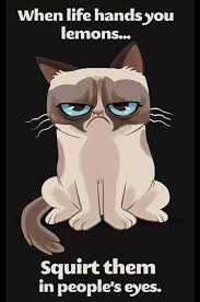 Cartoon Cat Memes - it s the little things me myself and m e grumpy cat humor