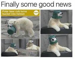Polar Bear Meme - the best polar bear memes memedroid