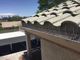 How To Get Rid Of Pigeons Off My Roof by Pigeon Control And Screening Las Vegas Pigeons Be Gone