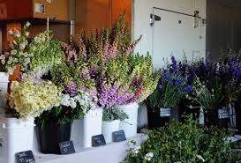 whole sale flowers the farm to florist wholesale story continues in montana and
