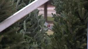 christmas tree sale boy scouts christmas tree sales affected by nationwide tree