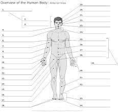 Human Anatomy Anterior 21 Best Anatomy Images On Pinterest Nursing Schools Medicine